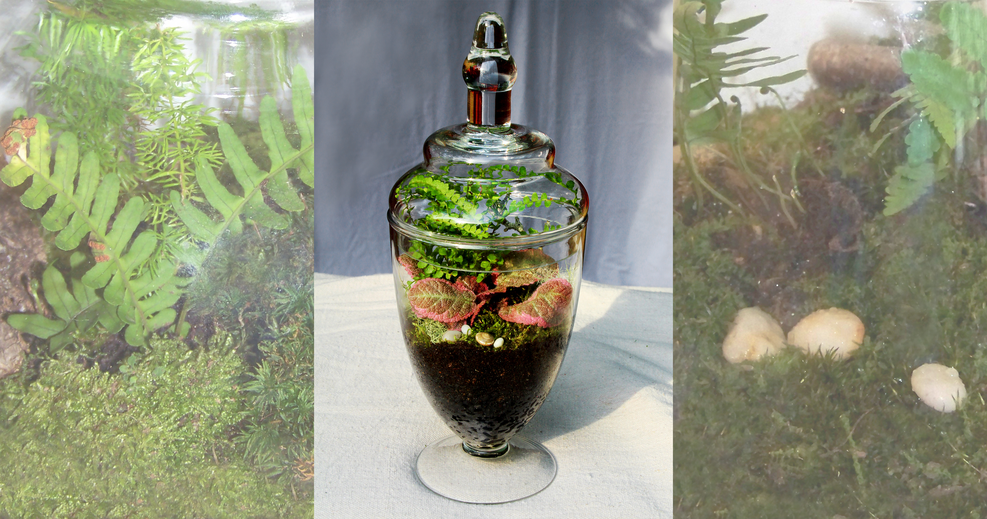 how to make your own terrarium misting system