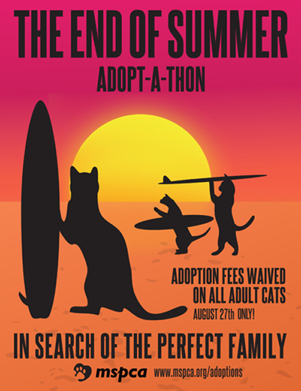 mspca end of summer vi adult cat adoptathon fees waived