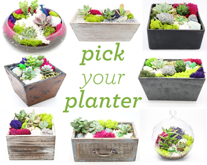 Pick_your_planter