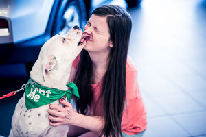 Boston Volvo to Host Inaugural Pet Adoption Event [06/11/17]