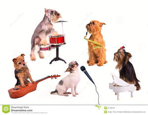 Dog-s-orchestra-band-21792751
