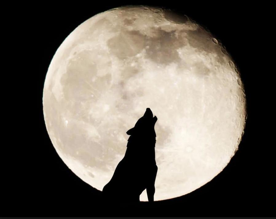 """Képtalálat a következőre: """"full moon"""""""