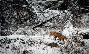 Animal-cold-environment-247395