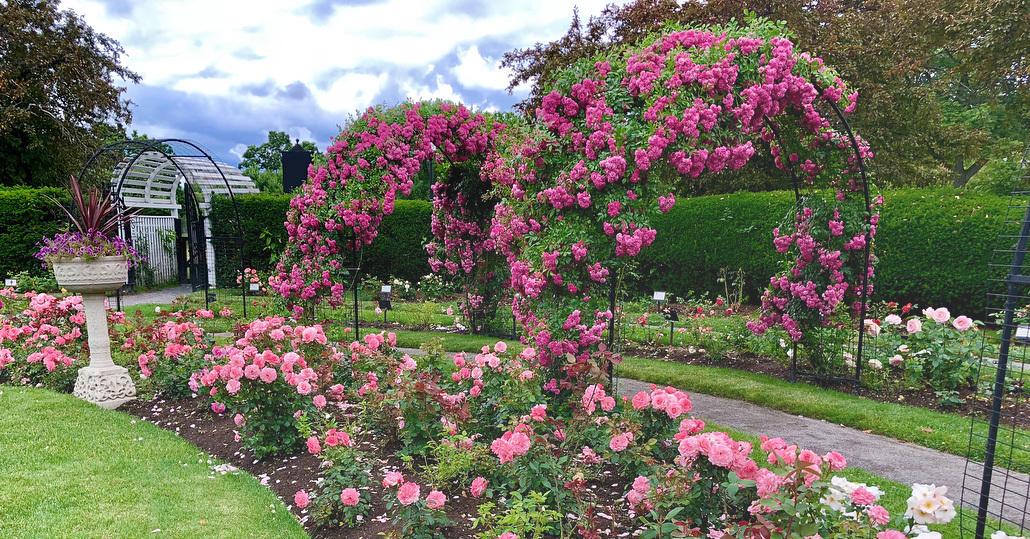 Resultado de imagem para Kelleher Rose Garden boston